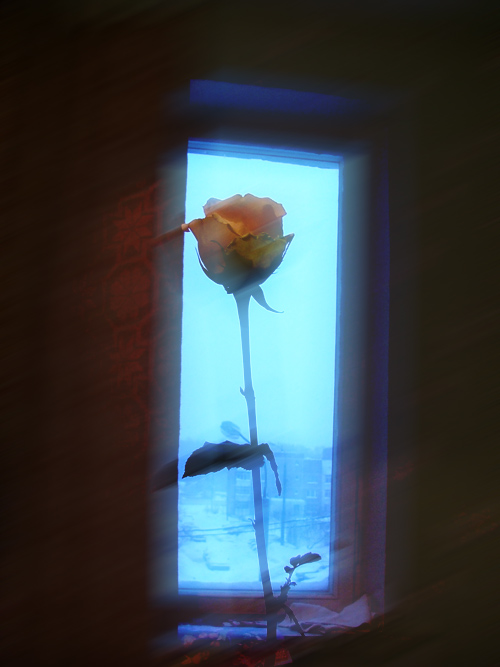 "фото ""pure morning"" метки: натюрморт,"