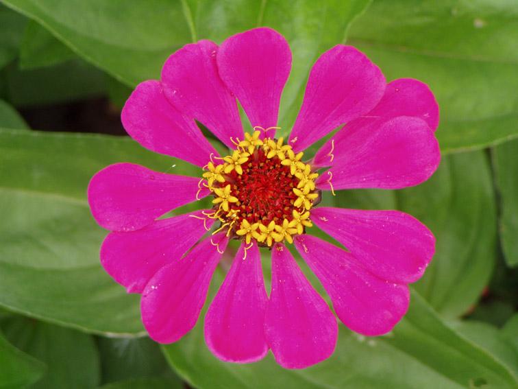 """фото """"Розовая нежность"""" метки: природа, макро и крупный план, цветы"""
