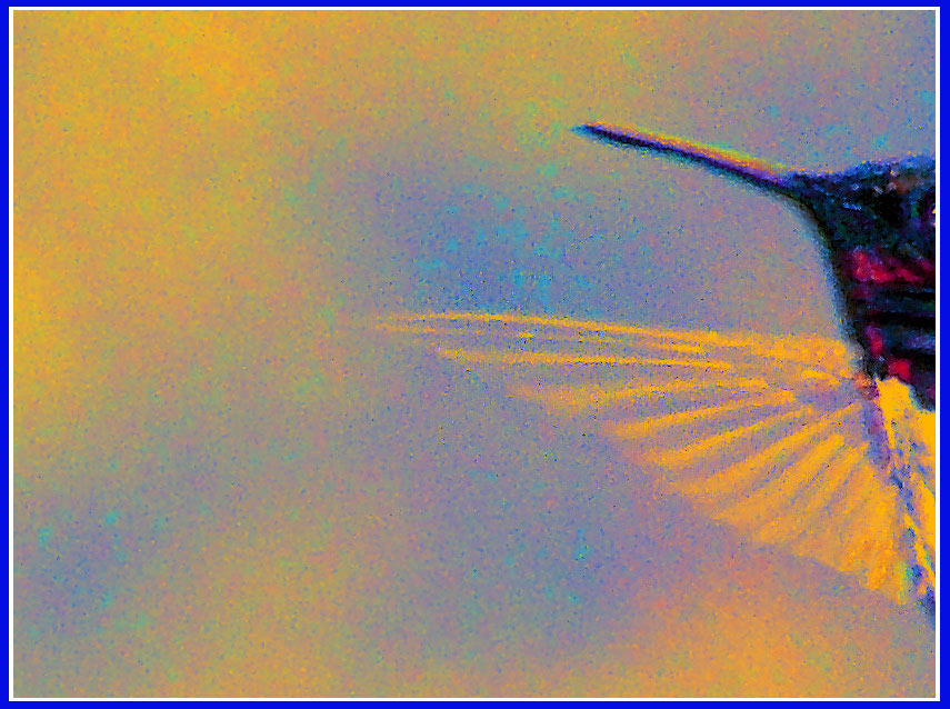 """photo """"Hummingbird Stage Right"""" tags: nature, macro and close-up, insect"""