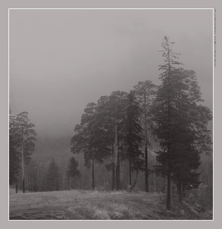 """фото """"Безысходность...(серия """"Настроение"""")"""" метки: пейзаж, лес, осень"""