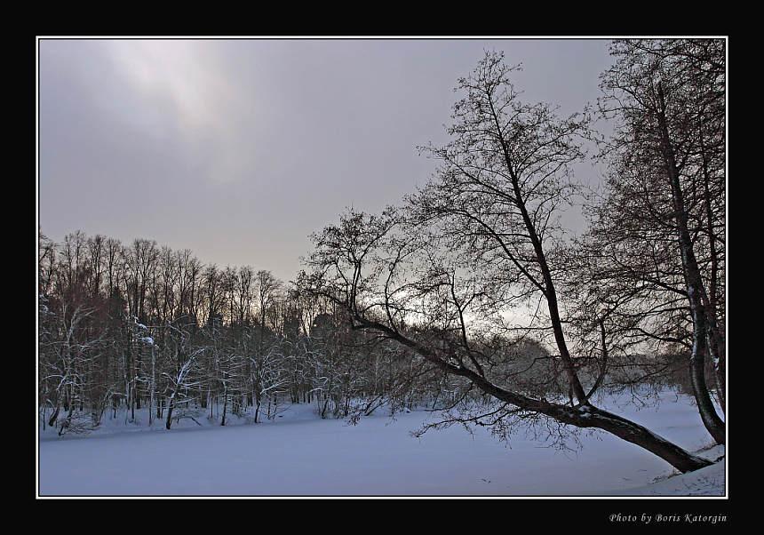"""фото """"Морозное безмолвие"""" метки: пейзаж, зима, лес"""