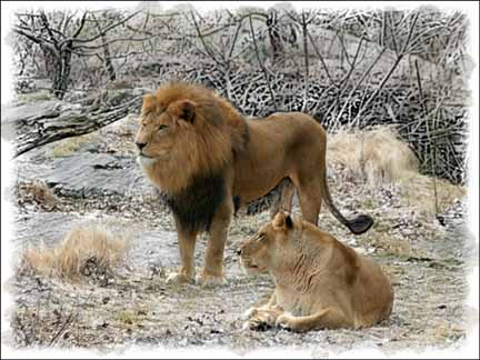 """фото """"George and Grace"""" метки: природа, дикие животные"""