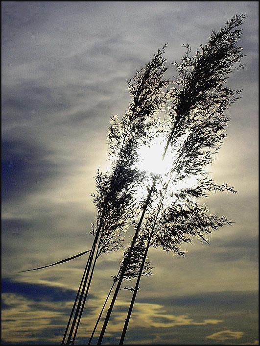 "фото ""Grass in the sun"" метки: природа, цветы"