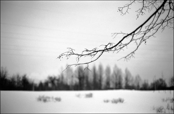 """фото """"Задевая струны"""" метки: пейзаж, зима"""