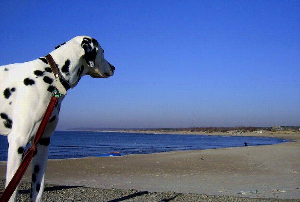 "фото ""on the beach"" метки: пейзаж, природа, вода, домашние животные"