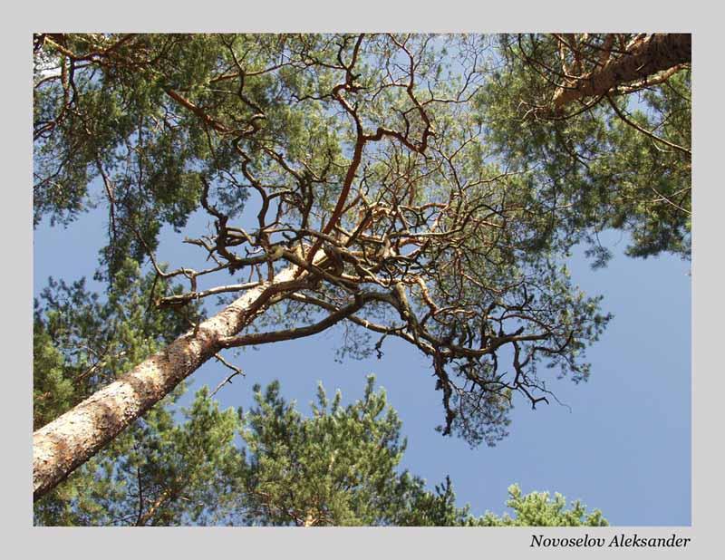 """фото """"Отдых в лесу"""" метки: природа, цветы"""