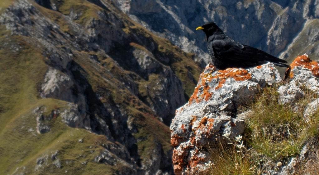 """фото """"Raven"""" метки: пейзаж, горы"""