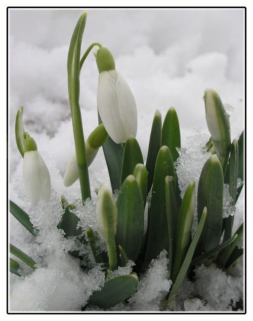 "фото ""Spings firts sign"" метки: разное, природа, цветы"