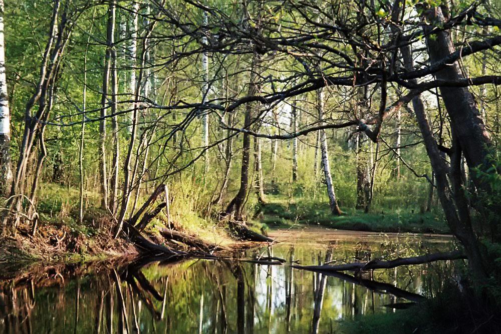 """фото """"Места обитания Бабы-Яги.. или ее сестры Кикиморы"""" метки: пейзаж, лес, лето"""