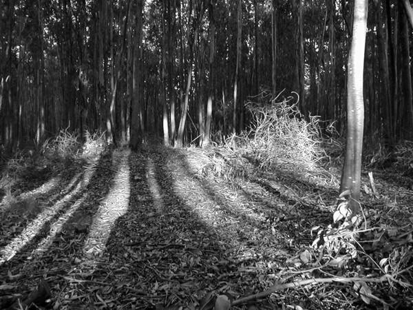 "фото ""Sombras del Bosque"" метки: пейзаж, черно-белые, лес"