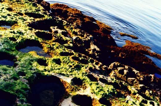 """фото """"Rock Pools"""" метки: пейзаж, вода"""