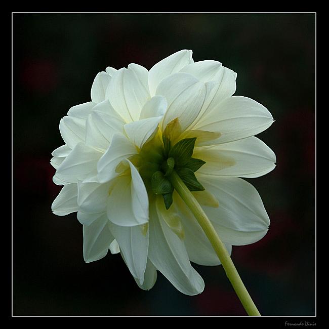 "фото ""Reverse"" метки: природа, цветы"