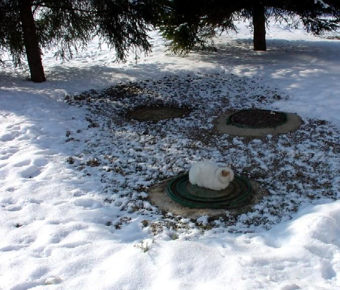"фото ""Теплое местечко!"" метки: природа, пейзаж, домашние животные, зима"
