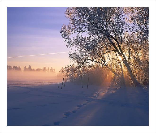 """фото """"Утренние кружева..."""" метки: пейзаж, закат, зима"""