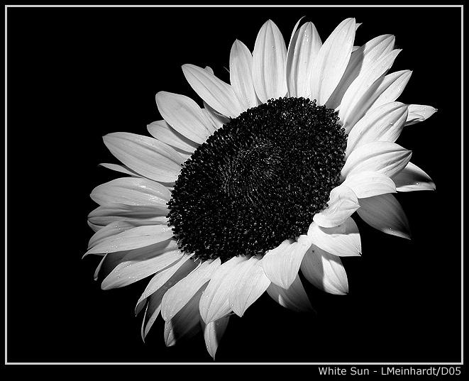 """фото """"White Sun"""" метки: природа, макро и крупный план, цветы"""