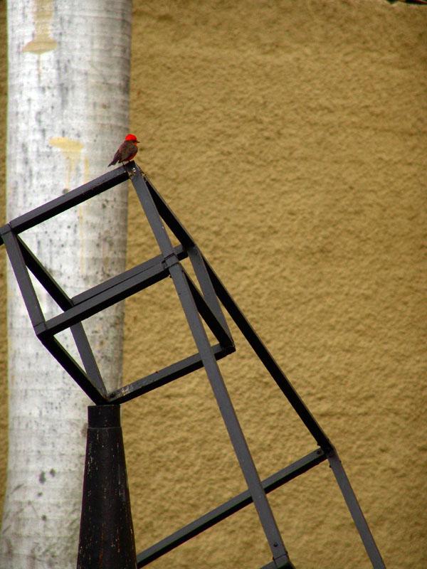 """фото """"Rojito"""" метки: природа,"""