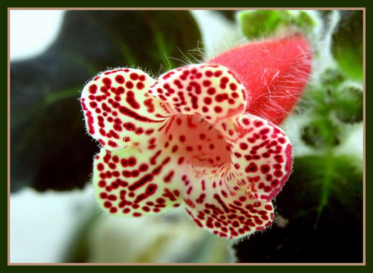 """фото """"""""Пушистик"""""""" метки: природа, макро и крупный план, цветы"""