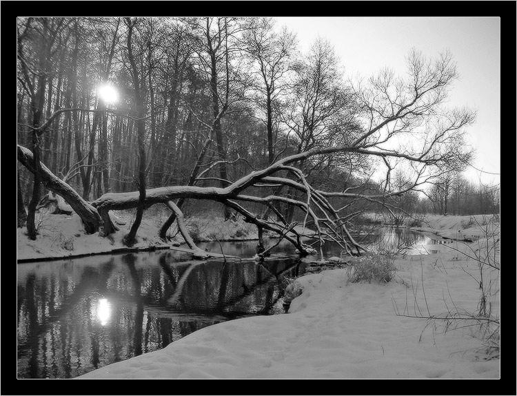 "фото ""неправильное дерево.. неправильное солнце.."" метки: пейзаж, зима, лес"