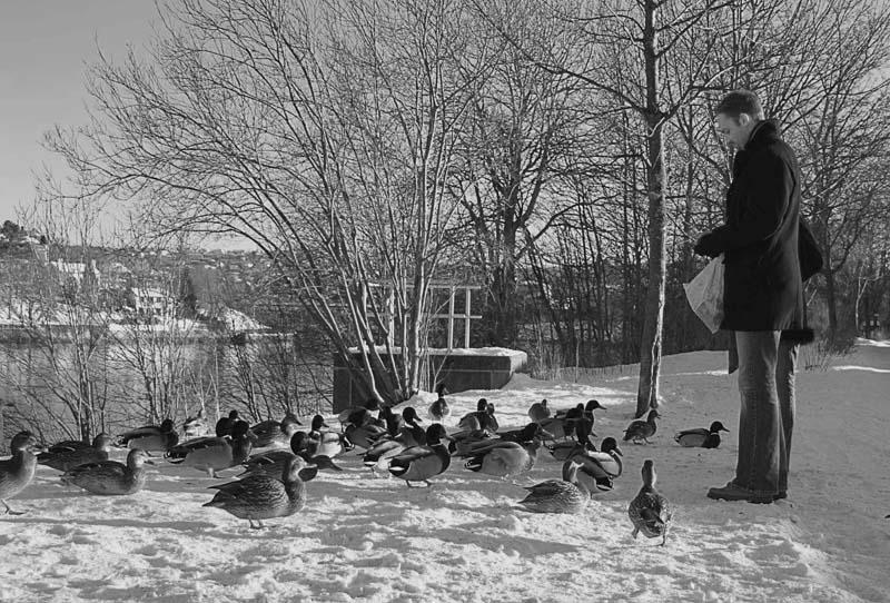"""фото """"winter etude"""" метки: разное,"""