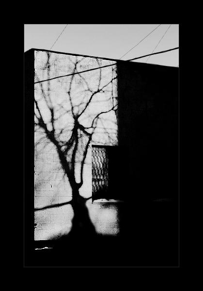"""фото """"Дерево"""" метки: черно-белые, разное,"""