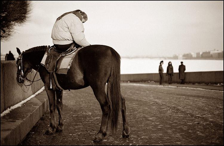 """фото """"лошадь, Питер и немного нервно..."""" метки: природа, жанр, дикие животные"""