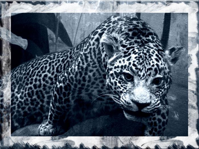 """фото """"скрытый и опасный #2"""" метки: природа, дикие животные"""
