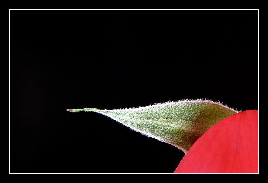 """фото """"Nature Things"""" метки: природа, макро и крупный план, цветы"""