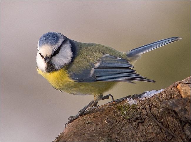 """фото """"Birdattitude"""" метки: природа, портрет, дикие животные"""