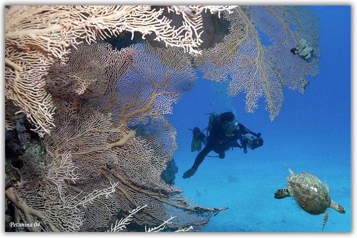 """фото """"Chasing turtles"""" метки: подводные,"""
