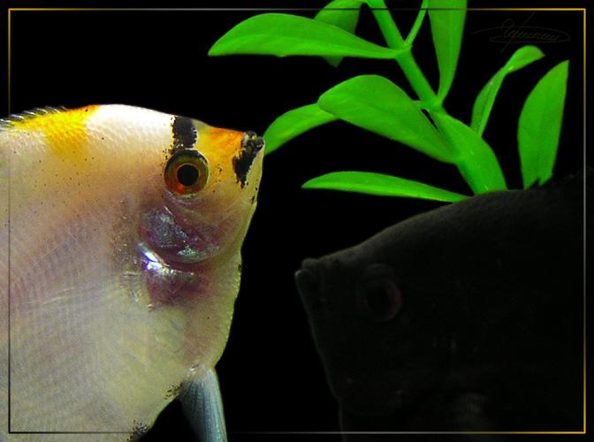 """фото """"Привет!"""" метки: подводные, природа, домашние животные"""