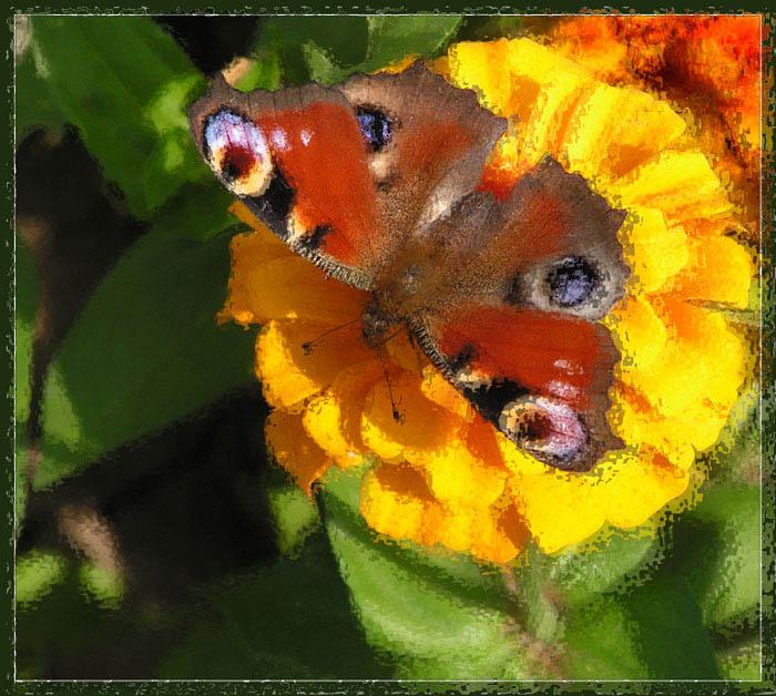 """фото """"Ответ импрессионистам (EXP)"""" метки: природа, юмор, насекомое"""