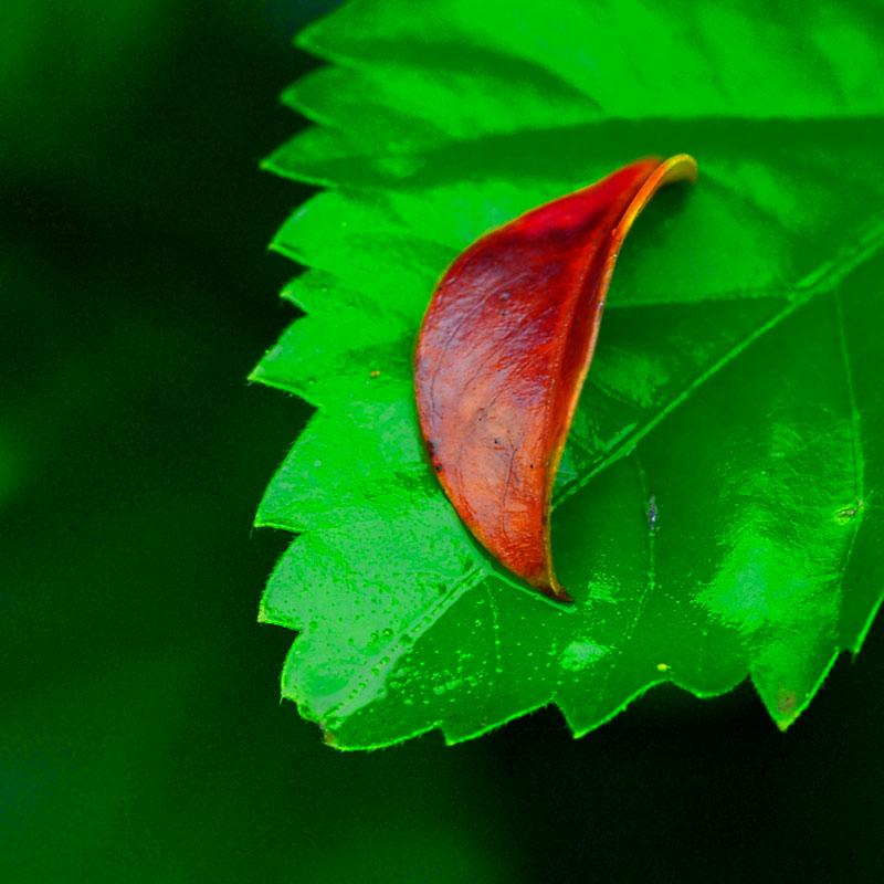 """фото """"Зелёное и красное"""" метки: абстракция, фотомонтаж,"""