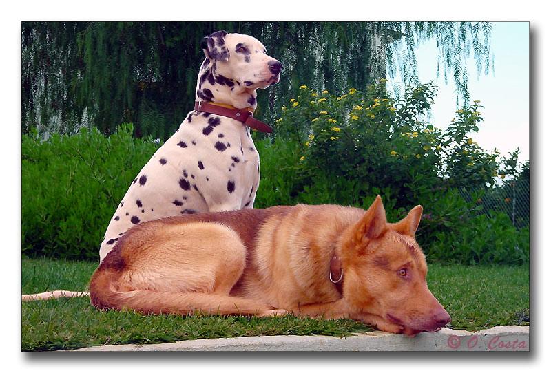 """фото """"Kayser and Pintas"""" метки: природа, разное, домашние животные"""