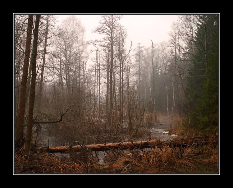 "фото ""Dangerzone"" метки: пейзаж, вода, лес"
