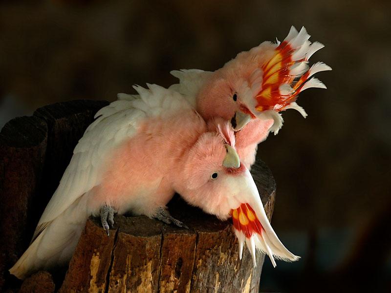 "фото ""Tenderness"" метки: природа, дикие животные"