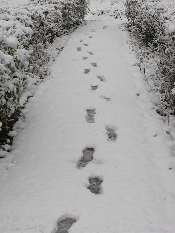 Следы на снегу мужчины фото