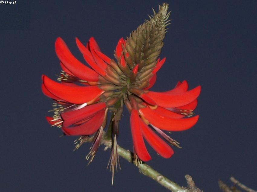 """фото """"Flower"""" метки: путешествия, природа, Австралия"""