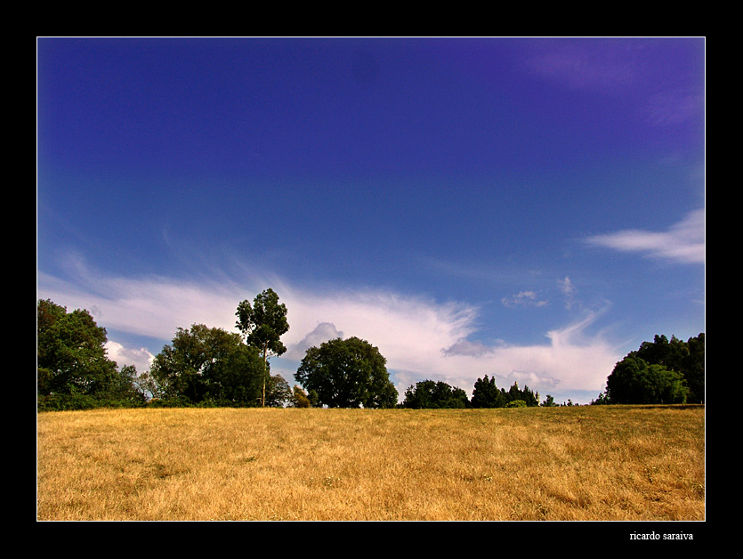 "photo ""Summer"" tags: landscape,"