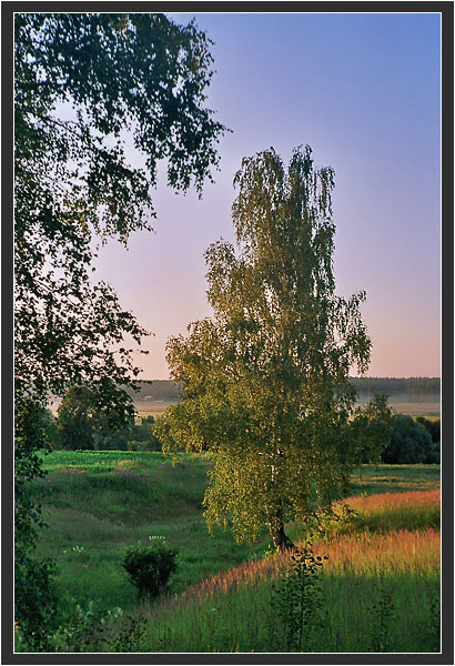 "photo ""Birch"" tags: landscape, summer, sunset"