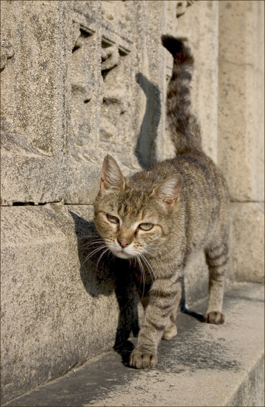 "photo ""cat of church"" tags: nature, pets/farm animals"