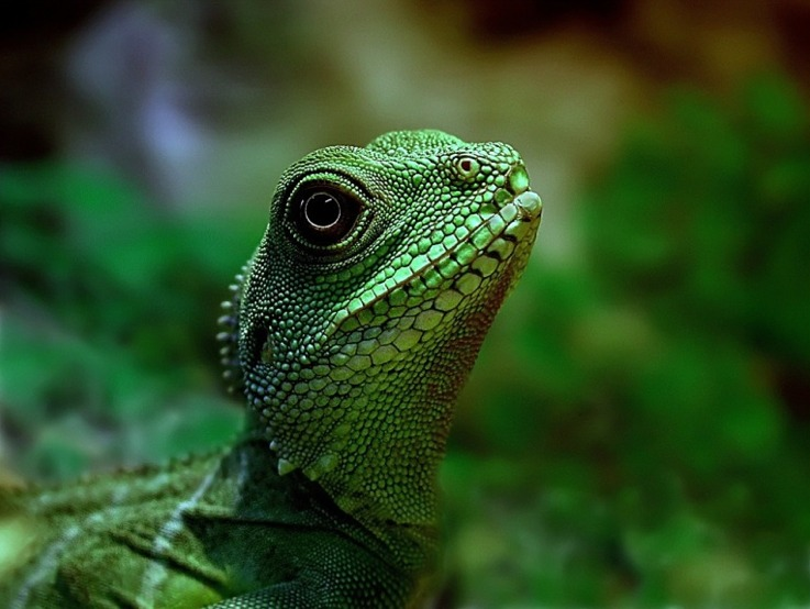 "photo ""Water dragon"" tags: nature, pets/farm animals"