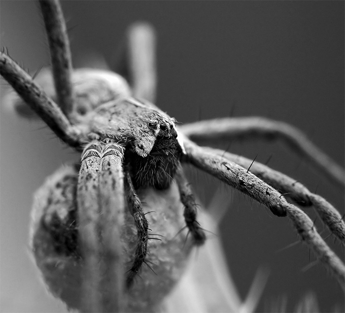 "photo ""Spider"" tags: nature, insect"