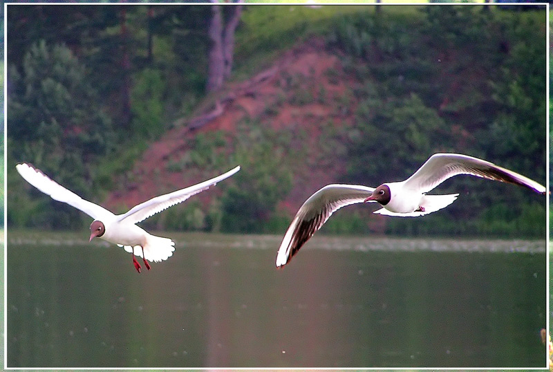 "photo ""Seagulls"" tags: nature, landscape, summer, wild animals"