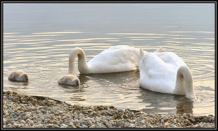 "photo ""family lessons"" tags: humor, nature,"
