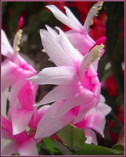 """фото """"ready to fly!"""" метки: природа, макро и крупный план, цветы"""