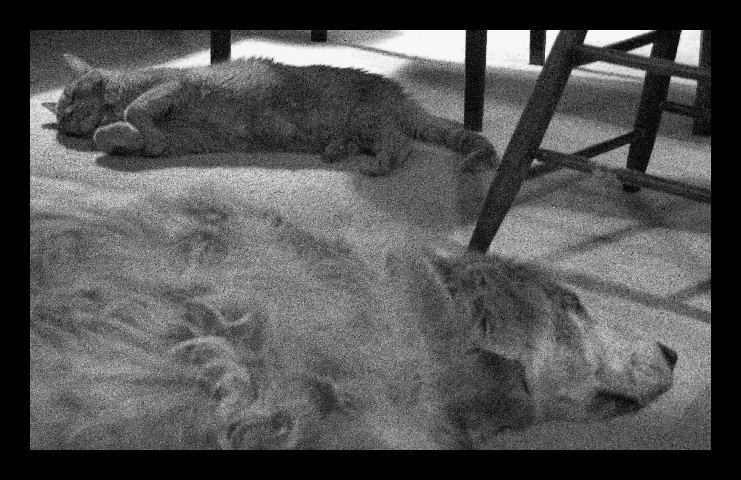 "photo ""sweet dreams"" tags: black&white, nature, pets/farm animals"