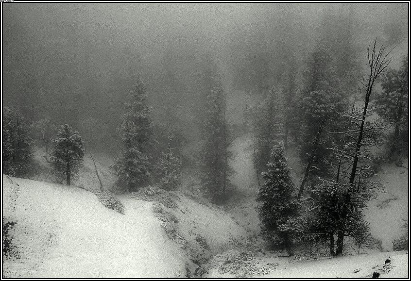 """фото """"It is snowing"""" метки: пейзаж, зима"""