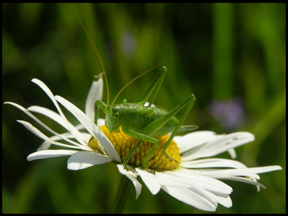 "photo ""Kuyja"" tags: nature, insect"