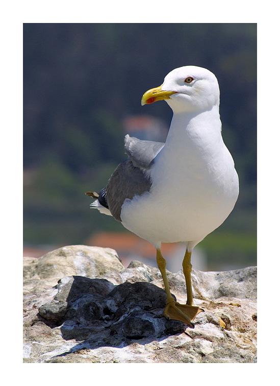 "photo ""pose"" tags: nature, wild animals"