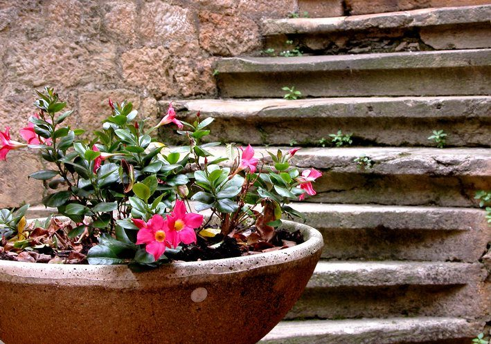 "photo ""stairs and flowers"" tags: still life, architecture, landscape,"